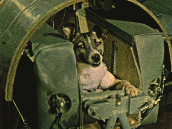 Собака лайка в герметической капсуле